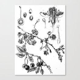 Botanical #CHERRIES Canvas Print