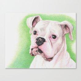 The White Boxer Canvas Print