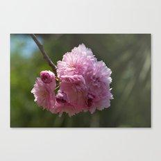 Japanese Spring - Prunus serrulata 638 Canvas Print