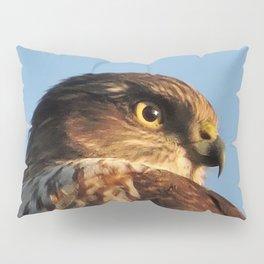 Young Cooper's Hawk Pillow Sham