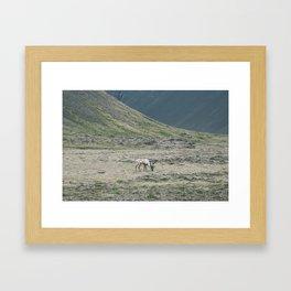 Icelandic Reindeer Framed Art Print