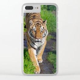 Siberian tiger, (Panthera tigris altaica) Clear iPhone Case