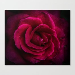 Texture Of A Rose Canvas Print