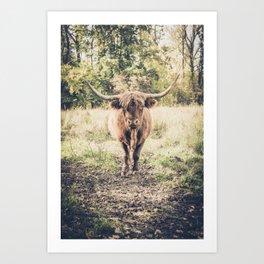 Highland scottish cow cattle long horn Art Print