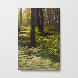 Sunny forest, pine fern forest with sunlight print Metal Print