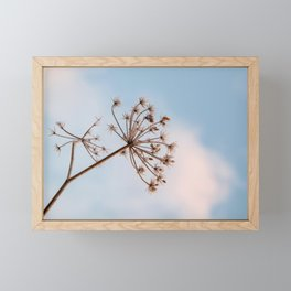 Fennel in a blue sky - nature photography Framed Mini Art Print