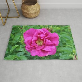 Dark Pink Rose in Full Bloom Rug