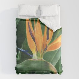 Simply Elegant by Teresa Thompson Comforters