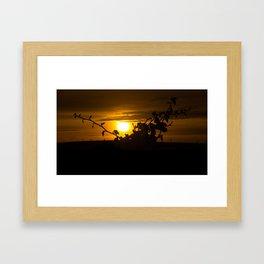 Ivy Sunset Framed Art Print