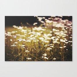Nature Moments Canvas Print