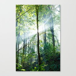 early morning rays Canvas Print