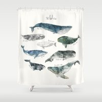 animal skull Shower Curtains featuring Whales by Amy Hamilton