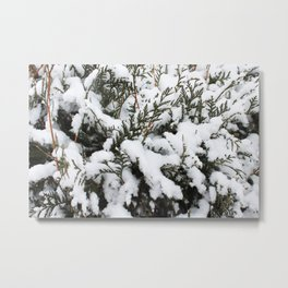 Cedar in the Snow Metal Print