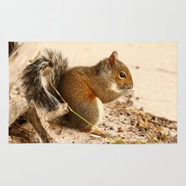 Squirrels Meal Rug