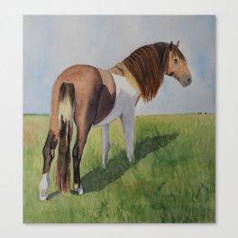Wild horse at Assateague Island Canvas Print
