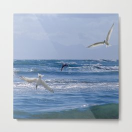 Terns diving into the ocean Metal Print