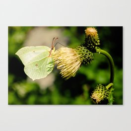 Butterfly or leaf Canvas Print