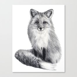 Red fox during winter Canvas Print