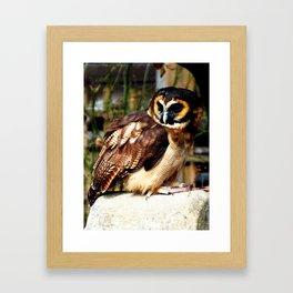 Brown Wood Owl Framed Art Print