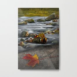 Red Autumn Leaf on a Rock along the River Shore Metal Print
