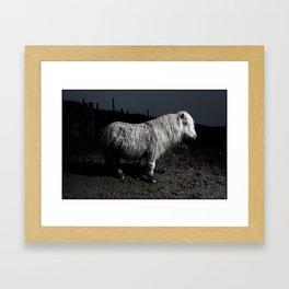 DARTMOOR PONYS FLASHED3 Framed Art Print