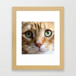 Ginger Mint Kitteh Framed Art Print