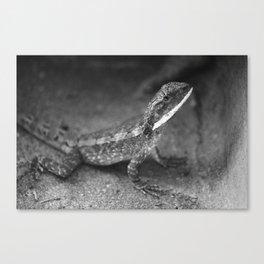 Mr. Lizard Canvas Print