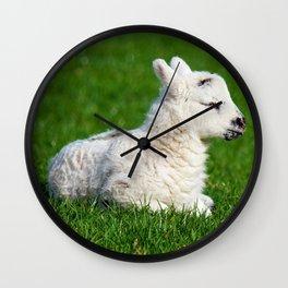 A Sleepy Newborn Lamb In A Field Wall Clock