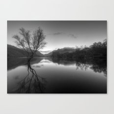 Tree Lake Canvas Print