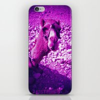 camel iPhone & iPod Skins featuring Camel by Cass Burton