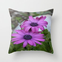 Purple and Pink African Daisy Flowers Throw Pillow