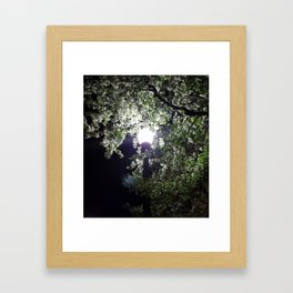 Nightly Blooms Framed Art Print
