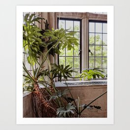 Plant in the Window, Summer Day Art Print