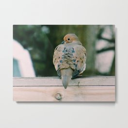 Lovie Dovie | Dove sitting on fence Metal Print