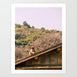 Monkey park Art Print