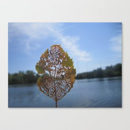 Nature's Lace Canvas Print