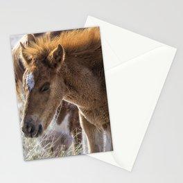 Salt River Sleepy Foal Stationery Cards