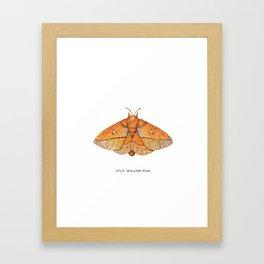 Spiny Oakworm Moth (Anisota stigma) Framed Art Print