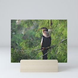 Roosting Anhinga Stylized Mini Art Print