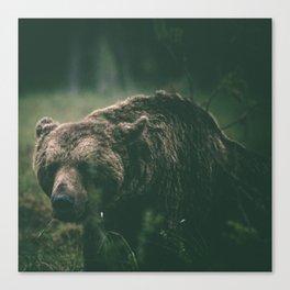 Brown bear I Canvas Print