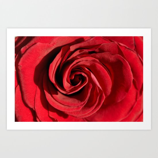 Red rose in LOVE- Roses Flowers Floral Art Print