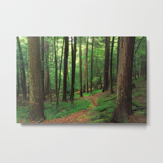 Forest 4 Metal Print