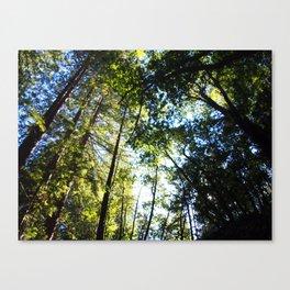 Santa Cruz Big Trees Canvas Print