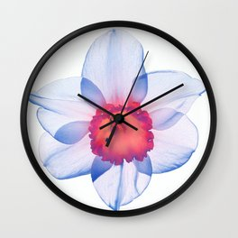 narcissus poeticus (feeling blue) Wall Clock