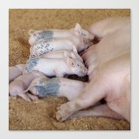 piglet Canvas Prints featuring Piglet Lunch by Tiffany Dawn Smith