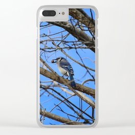 Blue Jay With Acorn Clear iPhone Case