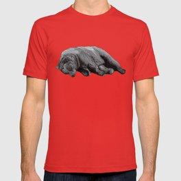 Sweet Dreams Ursus Arctus  T-shirt