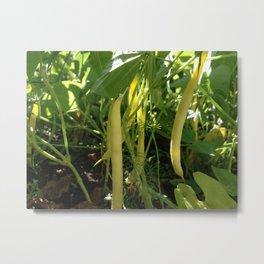 Yellow Beans Metal Print