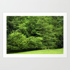 bosque Art Print