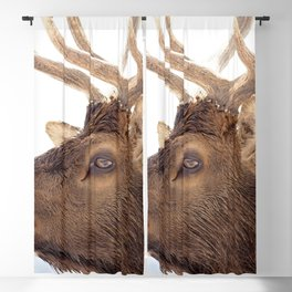 Watercolor Elk Bull 21, Neck Chin Blackout Curtain